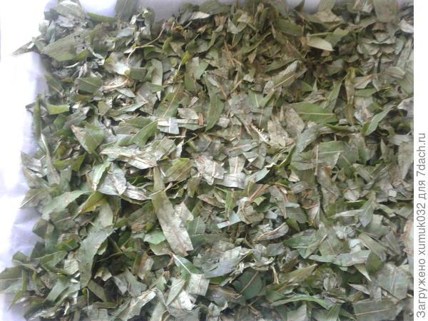 Заготавливаем иван-чай: от сбора до ферментации. Польза. Пошаговая инструкция