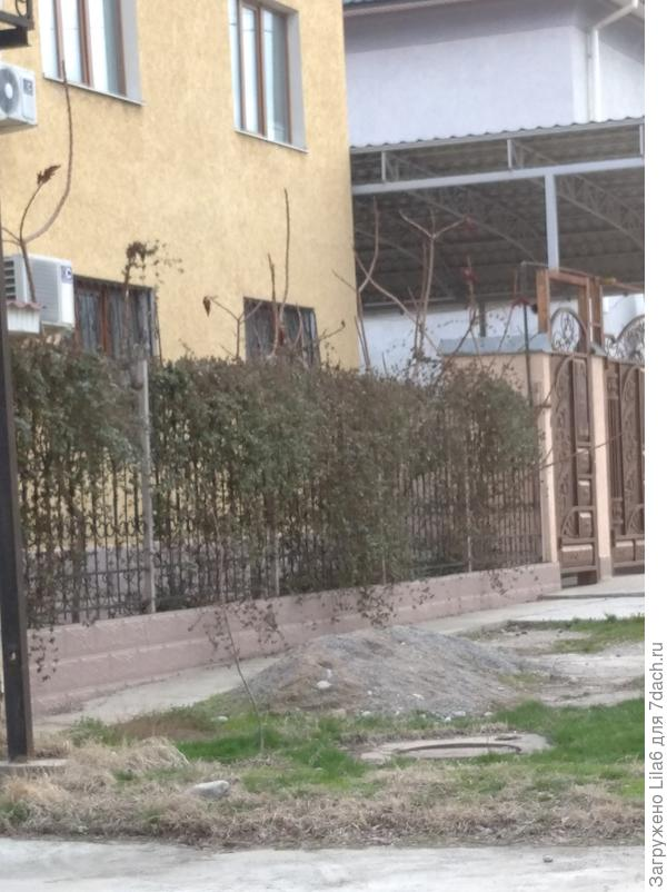 Лиана .юг Казахстана