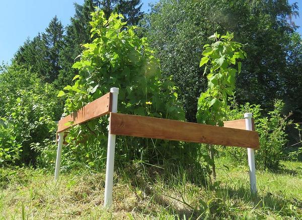 Загородка для кустарников из пластиковых труб. Фото автора
