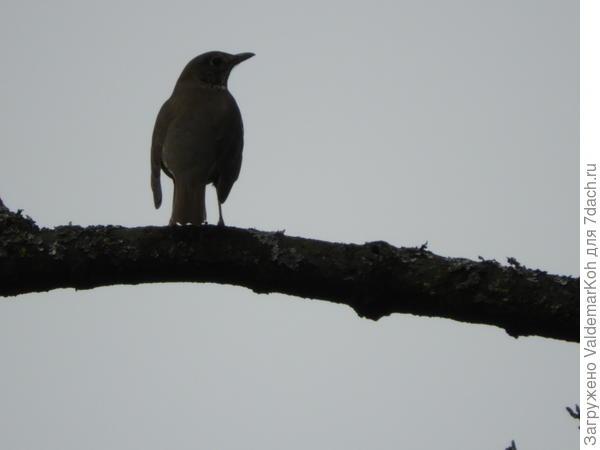 Неизвестная птица в Германии, снятая возле реки Лизер, в городе Виттлихе
