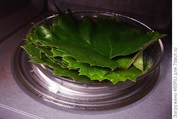 Заморозка виноградных листьев на зиму. Пошаговые фото