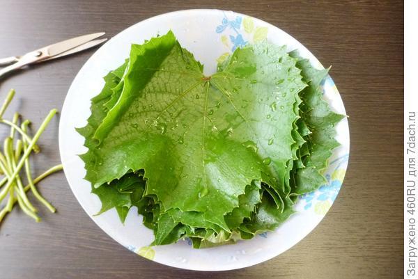 Солёные виноградные листья на зиму - пошаговый рецепт приготовления с фото