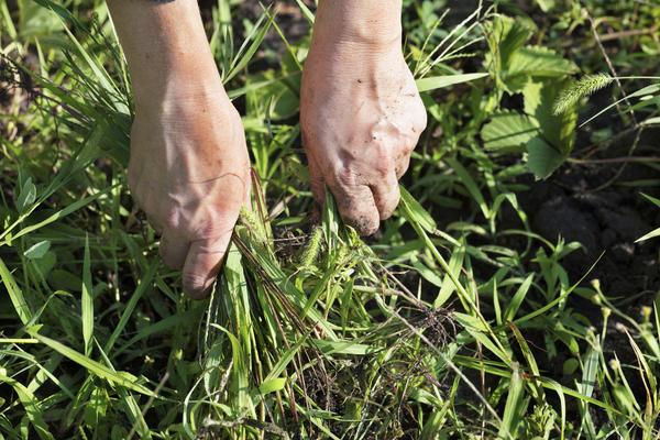 Риск заражения столбняком через почву возрастает при наличии любых повреждений кожи — царапин, заусениц и т.п.