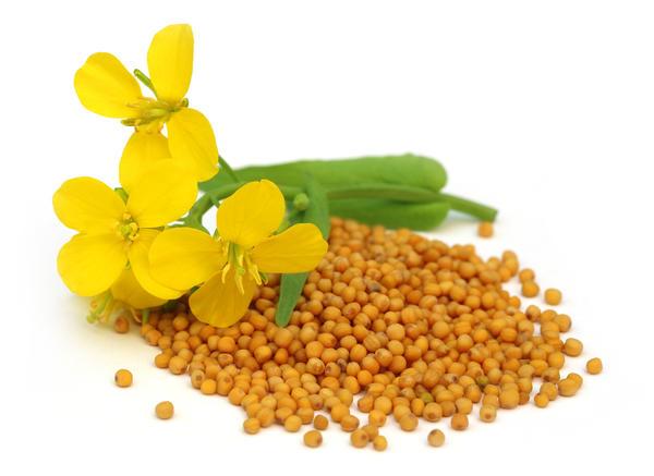 Семена горчицы - отличный антиоксидант
