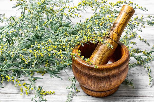Большинство лекарственных растений, возбуждающих аппетит, относятся к классу горечей