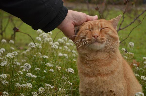 По статистике, стригущим лишаем чаще всего болеют владельцы кошек и собак, которые живут в частном секторе