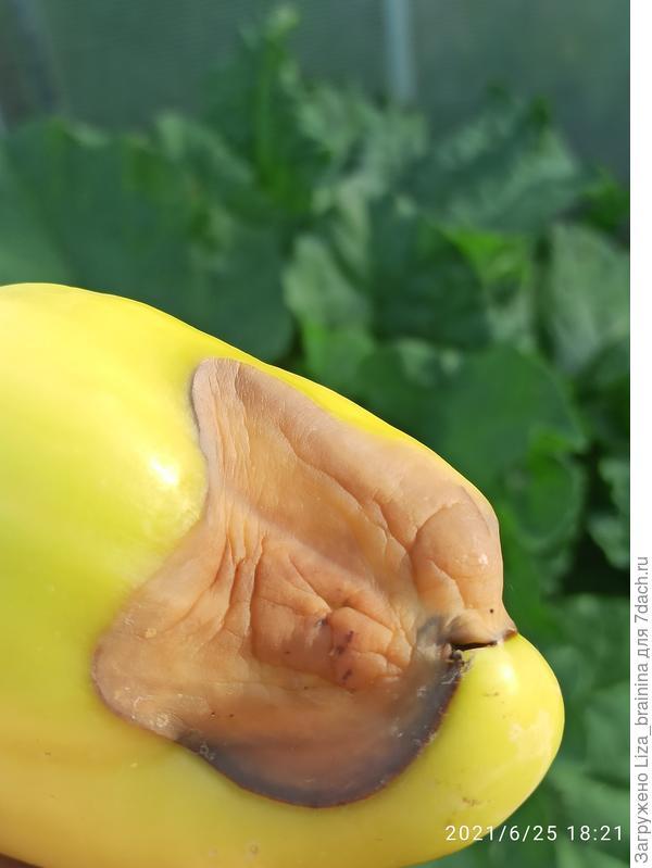 Какая болезнь повреждает перцы?