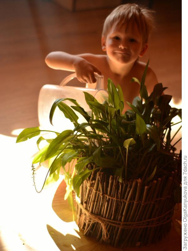 Мой младший сын поливает цветы