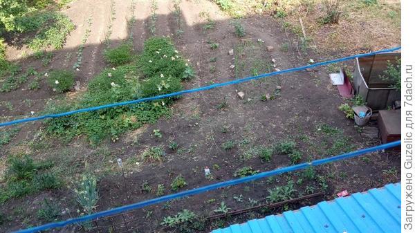 Часть территории полисадника, с глумбой гладиолусов укрытых сеткой