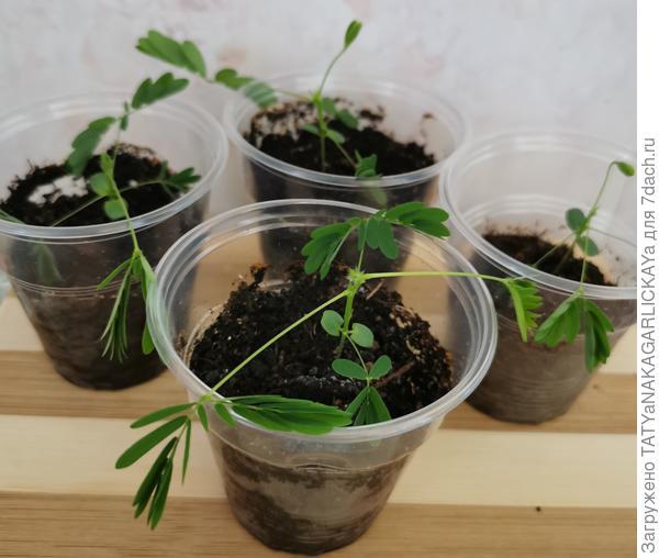 Ожившие семена, или Операция «Барботирование»