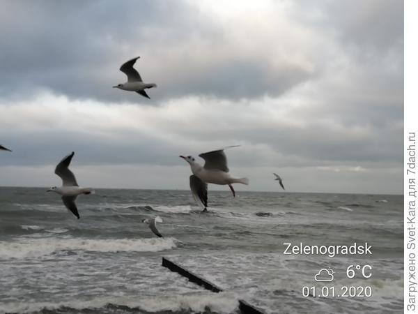 Море и чайки