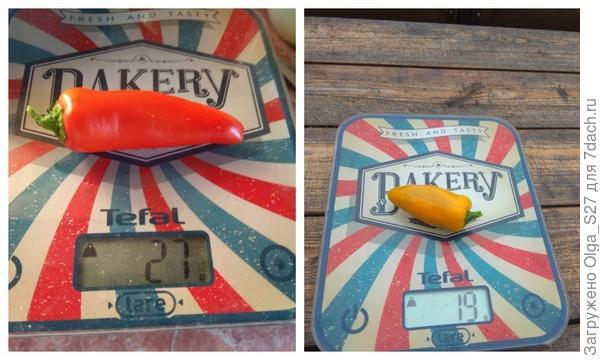 Перцы 'Апельсин красный' F1 и 'Апельсин жёлтый' F1. Битва за урожай