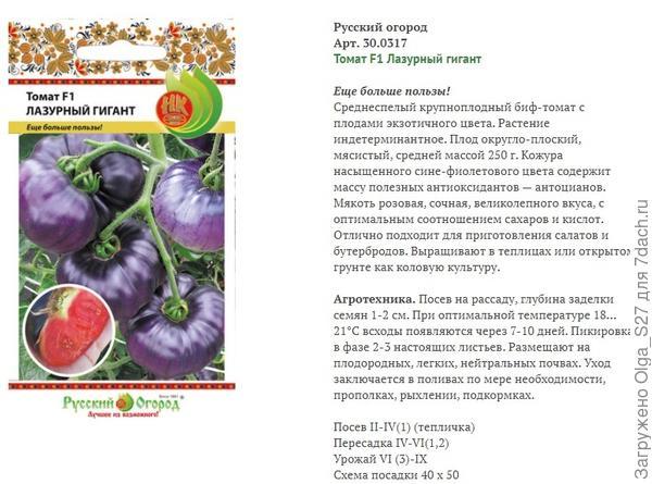Подводим итоги тестирования: томат 'Лазурный гигант' F1