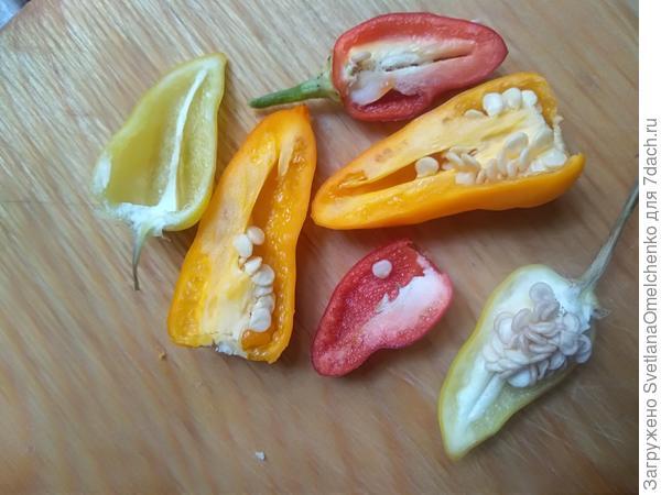 Сорву перчин и подарю букет... Подвожу итоги выращивания перца 'Огненный букет' от Аэлиты