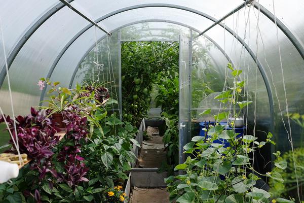 Вырастить хороший урожай в теплице помогут теплые грядки