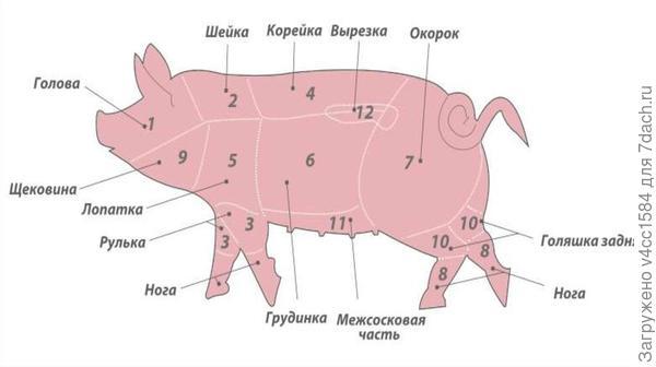 Как правильно приготовить шашлык из свинины, чтобы был мягкий? ответы экспертов
