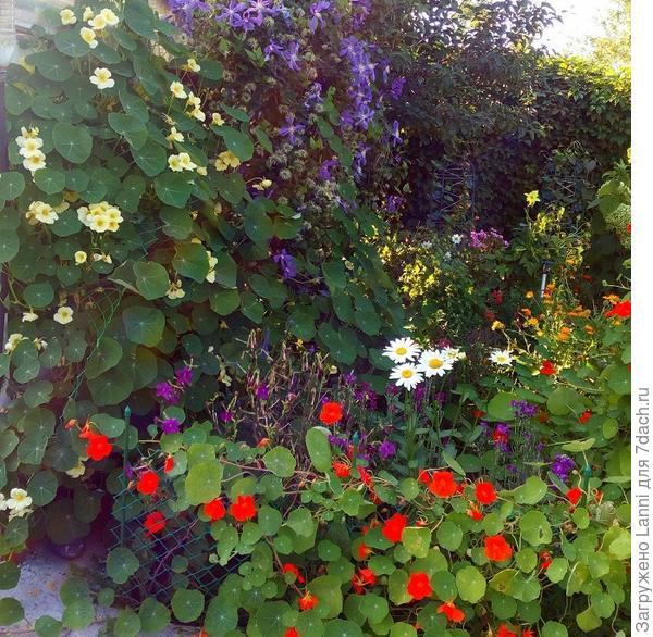 Цветы в моём саду.