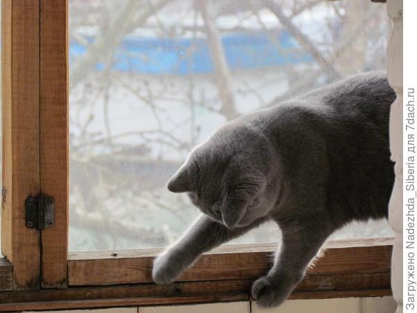 - Наш Кристик увидел на балконном окне МУХУ - первую в своей сознательной жизни!