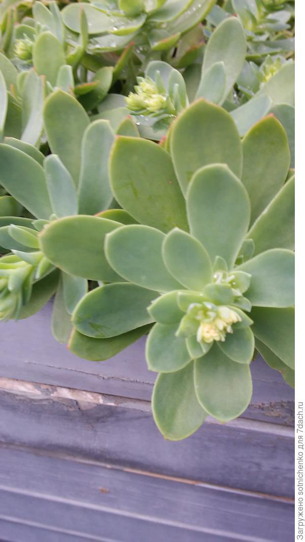 Растение высадили этой веской .Вчерашнее фото.