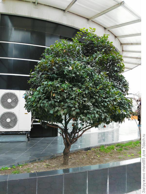 Общий вид растения