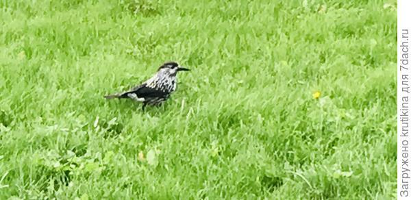 Как называется птица?