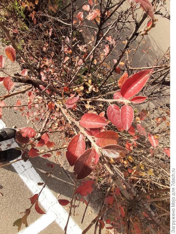 листья куста