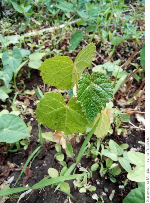 само растение