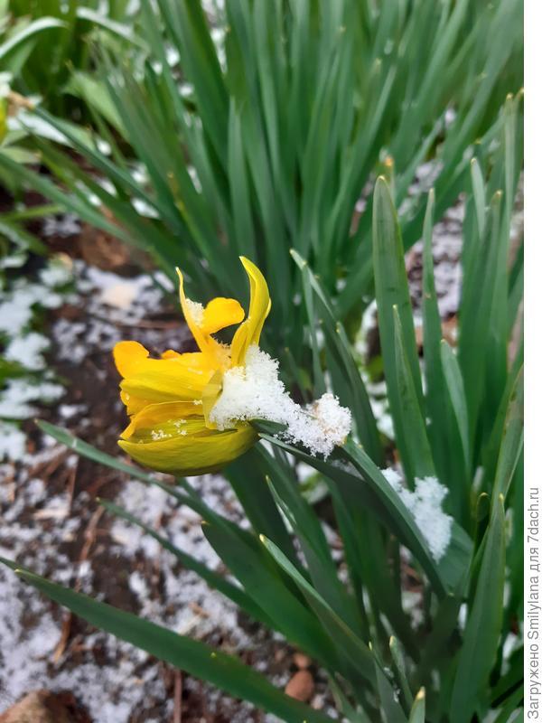 Незапланированный снег