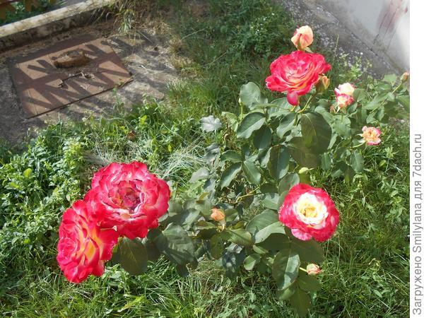 Насекомые-помощники в нашем саду