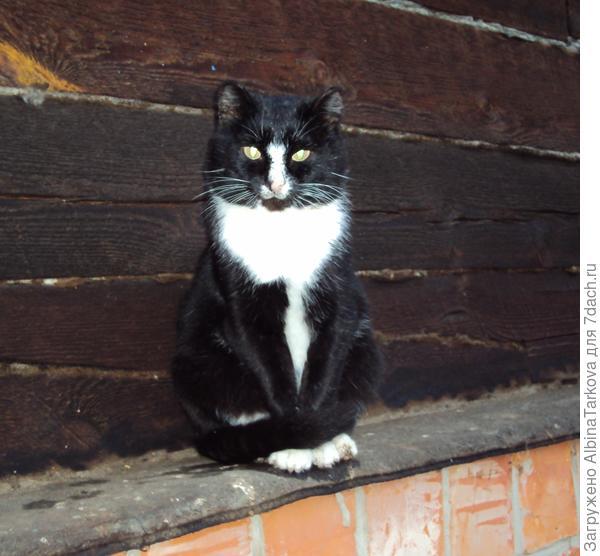 Василий, кот моей бабушки