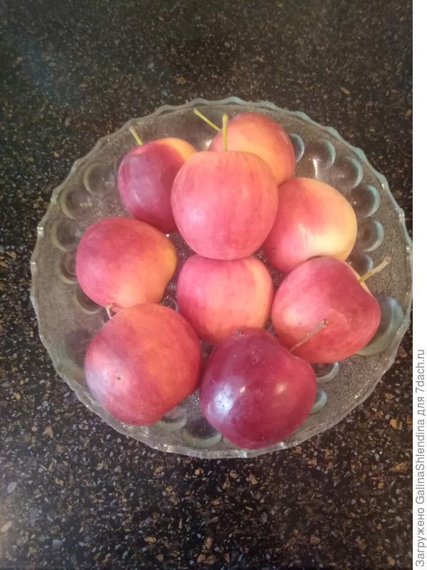 Яблонька в моем саду. Осенние хлопоты