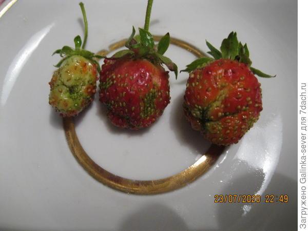 Страх, а не ягоды