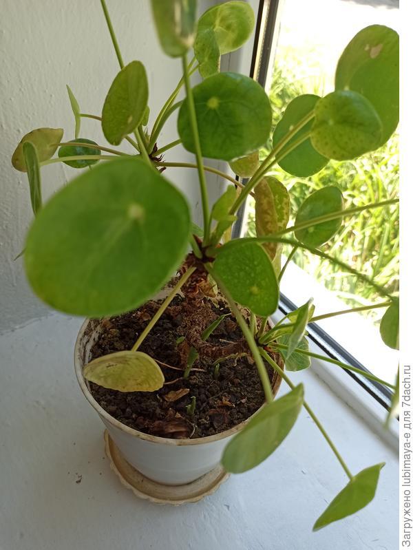 Добрый вечер подскажите пожалуйста как называется это растение?