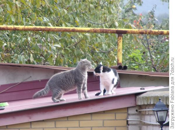 Побелка деревьев осенью. История с котятами