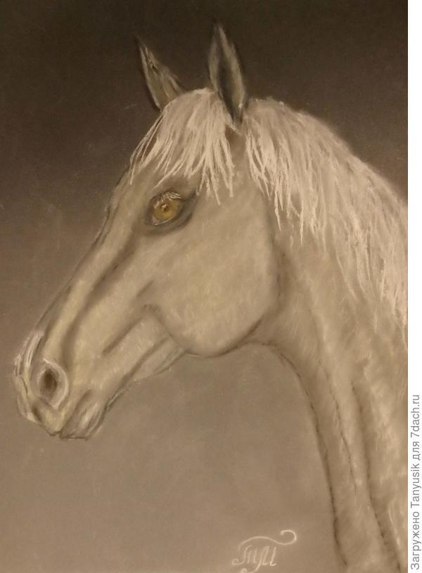 Эту лошадку зовут Снежинка.