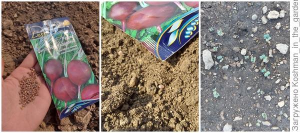 Посев редиса Пинк Сюрприз и редиса Фиолетовая королева в открытый грунт