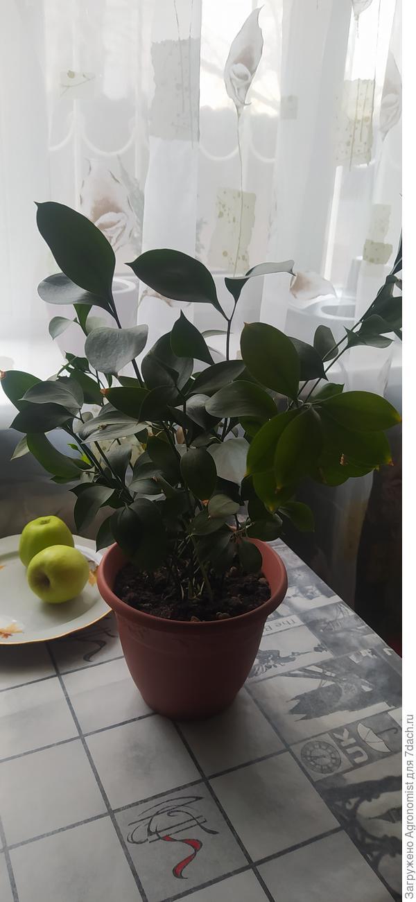 Растишка 1