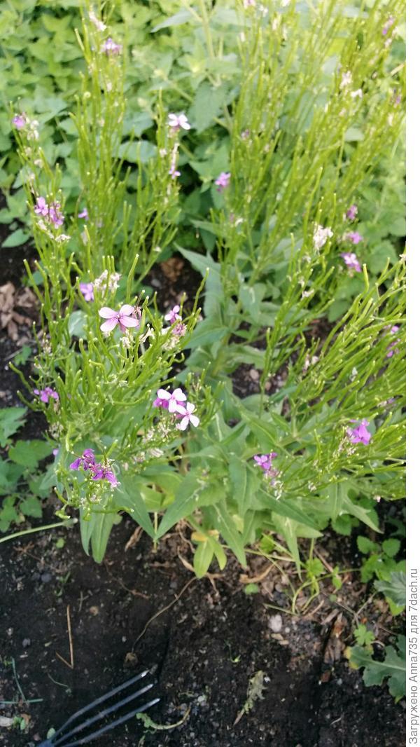 Неизвестные растения в цветнике - есть ли среди них сорняки, требующие удаления?
