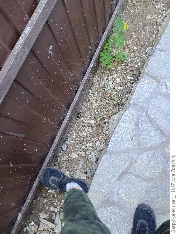 Можно ли посадить кипарисы на таком близком расстоянии от забора и отмостки, как на фото?