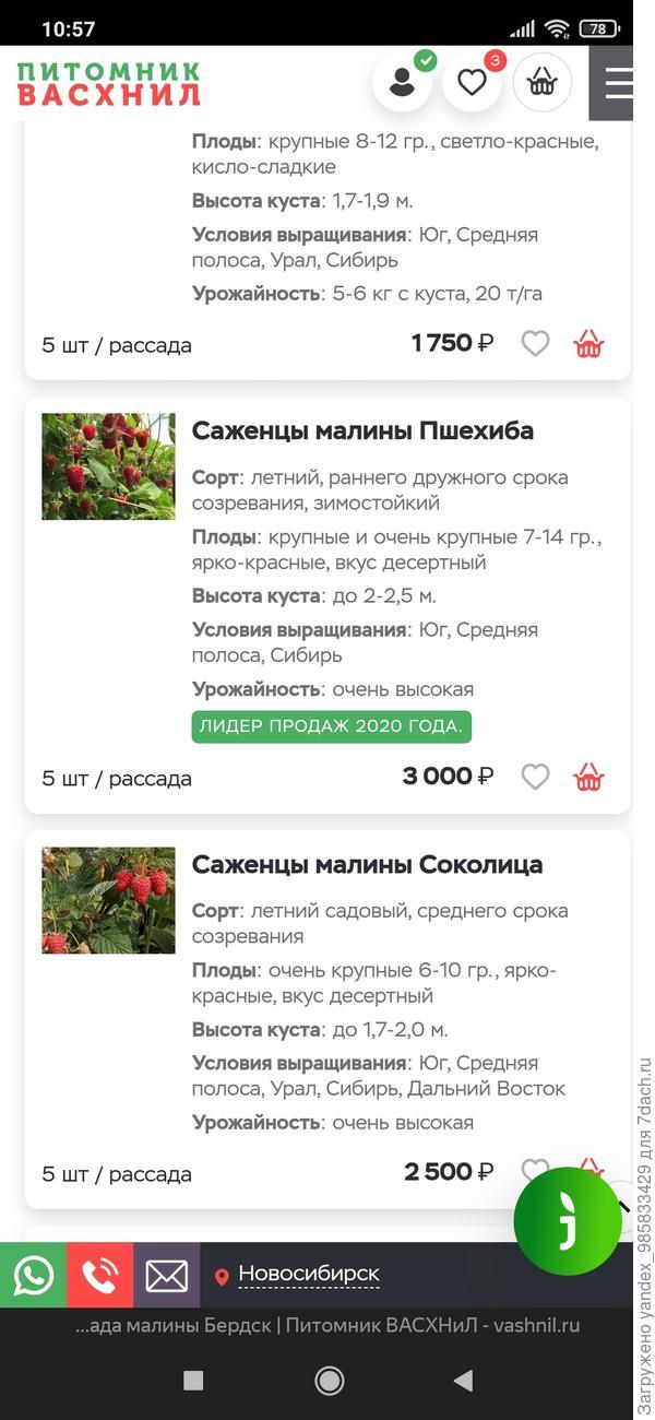 Фото цены саженца малины с сайта