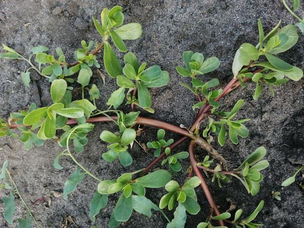 Незнакомое, но невероятно живуче растение.