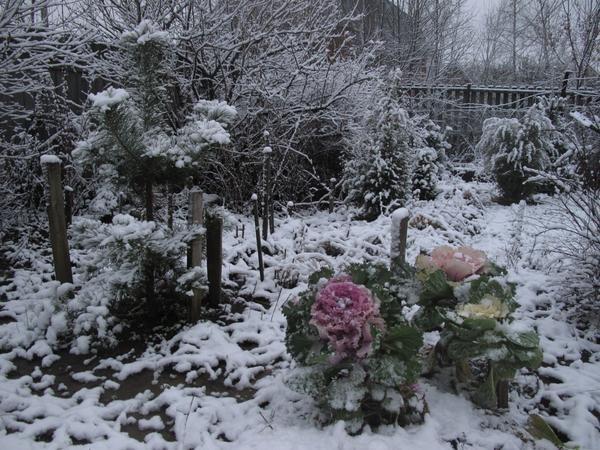 Зимний пейзаж с декоративной капустой