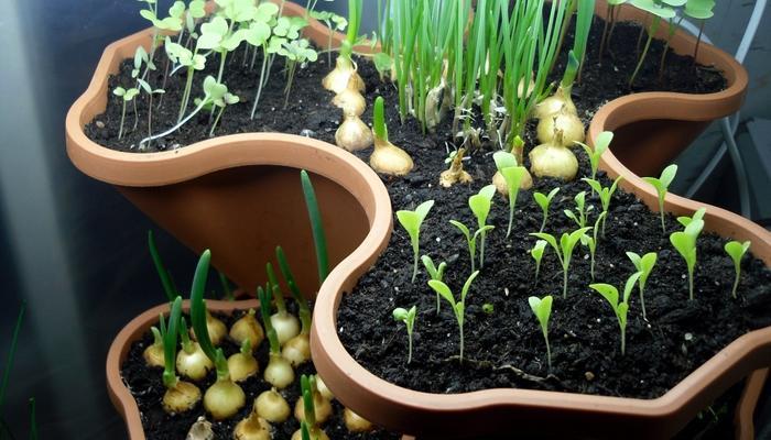 10 секретов домашнего огорода