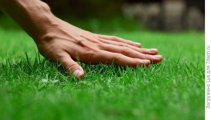 Как правильно посеять газон: 9 подробных видеоинструкций
