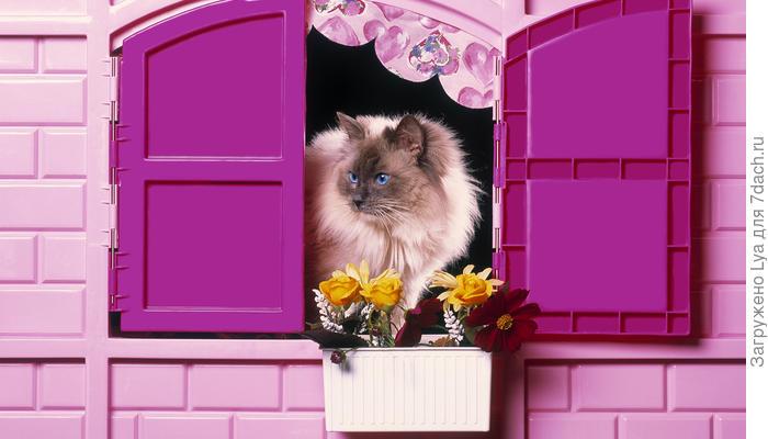 Как обустроить уютное жилище для кошки на даче