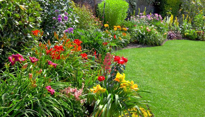 Многолетние цветы для летней клумбы