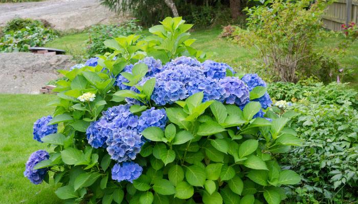 10 растений, цветущих в июле