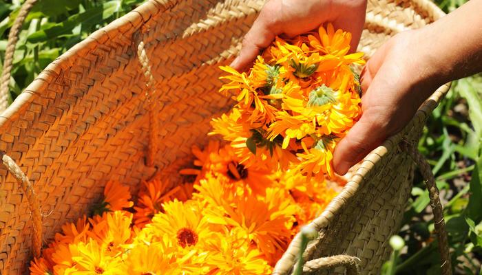 Садовые растения для красоты и здоровья волос