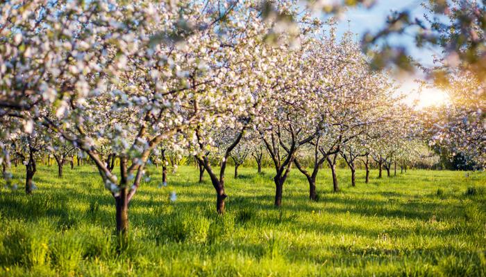 Как правильно заложить сад: размышления садовода
