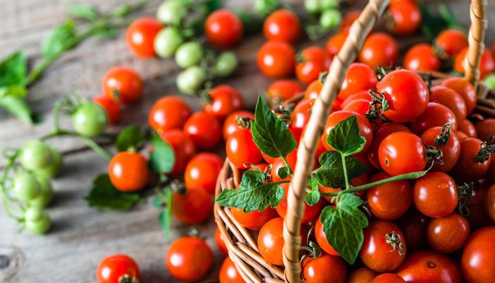 Томаты черри и смородиновые: 10 лучших сортов по мнению садоводов